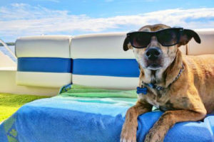 dog with sunglasses on laying on a towel